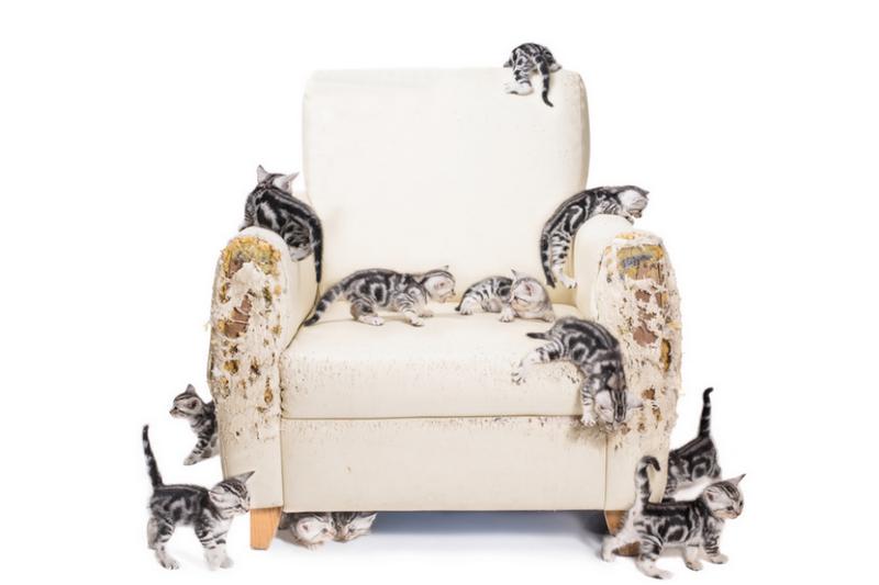 destruktives kratzverhalten bei katzen artgerechtes. Black Bedroom Furniture Sets. Home Design Ideas