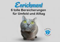 enrichment für katzen