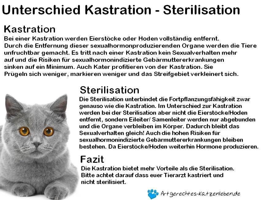 andrea, Autor auf Artgerechtes-Katzenleben.de