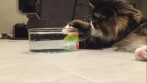 robofisch für katzen